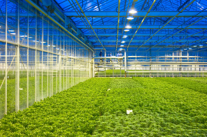 LED lighting in greenhouses